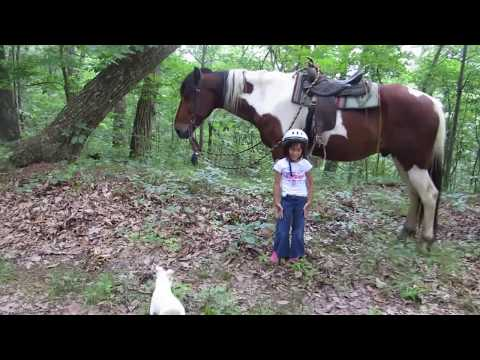 Little girls, Big Horses