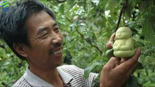 10 सबसे महंगे फल //Top 10 Most Expensive Fruits in the World in hindi