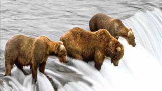Фильм 20. Медведи на рыбалке.wmv