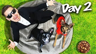 Last to Leave Giant Beanbag Wins $10,000 Challenge! (PawZam Dogs vs. Game Master Incorporated)