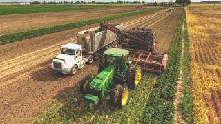 2018 SUGAR BEET HARVEST!! Michigan   Amity Harvester   #Farming