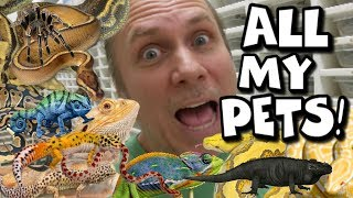 FEEDING ALL MY PET REPTILES!! THOUSANDS OF THEM! Brian Barczyk