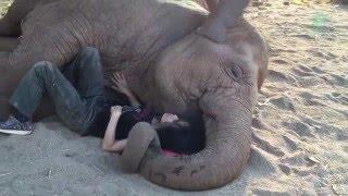 A woman falls asleep with elephant