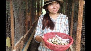 quail egg farm in savannakhet laos