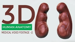 Free Medical Video Footage Episode -2 |  Medical Stock Footage  |  3D ANIMATED MODEL ANATOMY