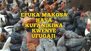 Epuka Makosa Haya Ufanikiwe Kwenye Biashara ya Ufugaji wa Kuku