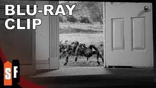 Tarantula (1955) - Clip: Tarantula Escapes (HD)