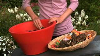How to plant Dahlias in pot or tub