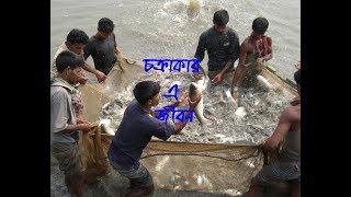 Documentary   Chokrakar A Jibon   Bappy Akhond   Bhola   Sub - Fish Feed