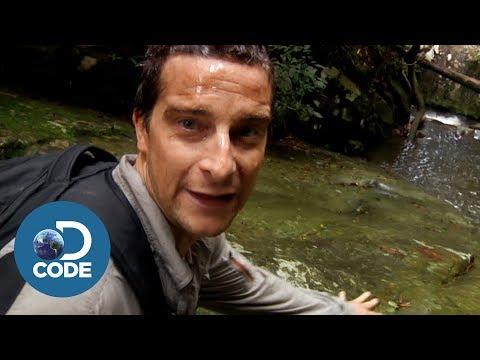 Xxx Mp4 Bear Grylls In Borneo Jungle Man Vs Wild 5 6 3gp Sex