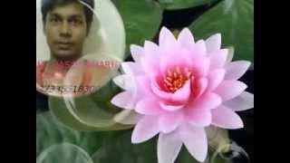 Bangla gojol sokol nabi shera nabi