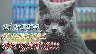 El mejor comercial de gatos que verás en tu vida   Gatos en el supermercado