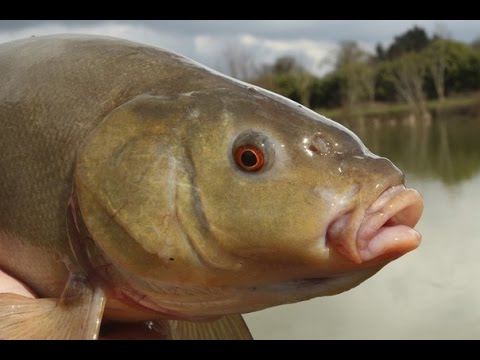 рыбалка в бухте глубокое