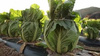 Amazing Modern Technology Farming Skill and Technologies that are interesting for viewing