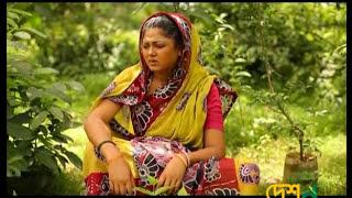 Golapjan  |Berotihin Natok | DeshTV |EID-AL-FITR 2017
