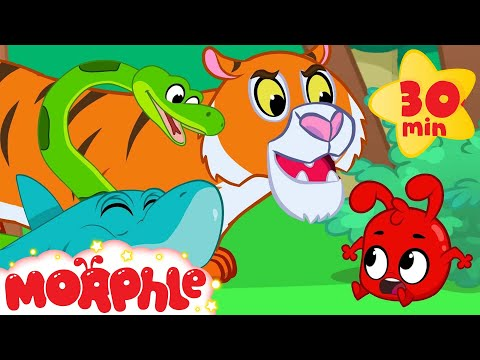 Morphle and the Scary Animal Bandits - Snake, Tiger, Shark, Lion and Dinosaur Videos for kids