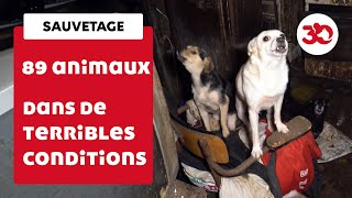 Ils vivaient dans des conditions effroyables, 89 animaux sauvés