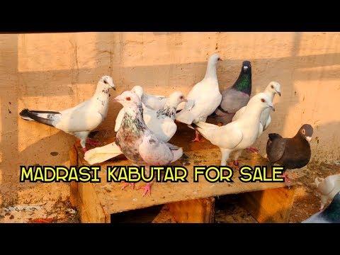 Xxx Mp4 Madrasi Kabutar For Sale Sahil Vikas Nagar Delhi 3gp Sex