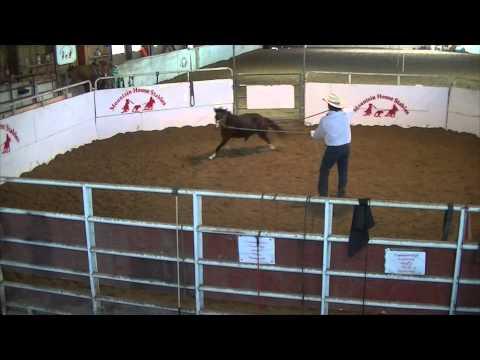 Xxx Mp4 5yo Pony Wild Horse Breaking 3gp Sex