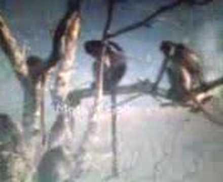 punjabi monkey fucking