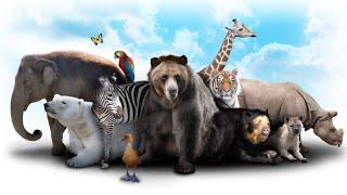 إختبار أصوات الحيوانات - حاول تخمين إسم الحيوان من صوته !!