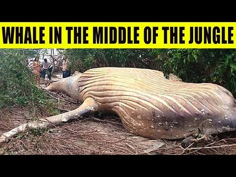 9 Strangest Findings in the Jungles