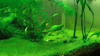 HOW TO: Prevent Aquarium Algae
