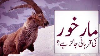 Qurbani Special   Markhor Ki Qurbani   Qurbani 2017   Maulana Ilyas Qadri   Madani Channel
