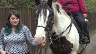 City Care Partnership Horse Riding Return of the Horses