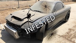 MY CAR IS INFESTED WITH BLACK WIDOW SPIDERS