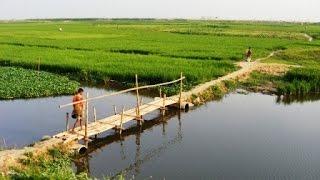Beautiful Bangladeshi Village