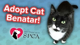 Adopt Cat Benatar! // Adoption Featurette