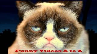 Funny Video Cat Happy Birthday Song