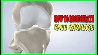 This Is How To Regenerate Your Knee Cartilage! | Best Home Remedies
