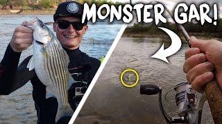 Fishing for Monster Striped Bass! - Vlog (River Fishing)