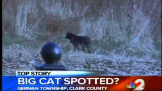 New panther siting in Clark County