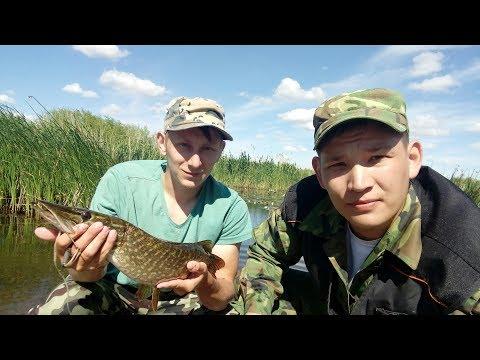 платная рыбалка щарка