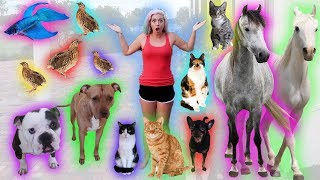 FEEDING ALL MY PETS * NIGHT TIME ROUTINE *