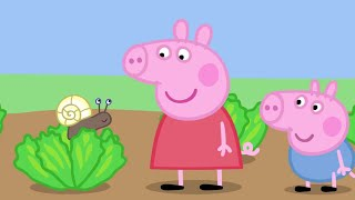 Peppa Pig English Episodes - Animals! Peppa Pig Official
