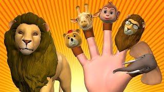 Animal Finger Family 3 | Finger Family Kids Songs - Animals Nursery Rhymes for Children