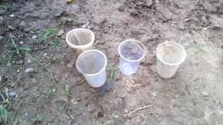 3# पौधे कैसे लगायें (starting to planting)