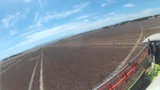 poppy harvesting tasmania gopro lexion