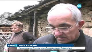 Атака на мечки срещу цяло село - Новините на Нова (29.09.2015)