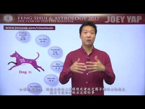 2017 Animal Sign Forecast DOG