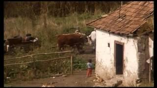 Ciganytörveny   Romani kris
