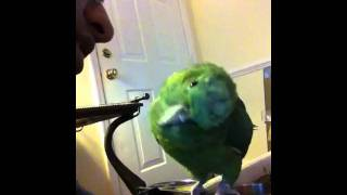 Bird Singing Happy Birthday