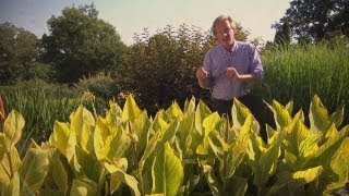 Growing Cannas | At Home With P. Allen Smith