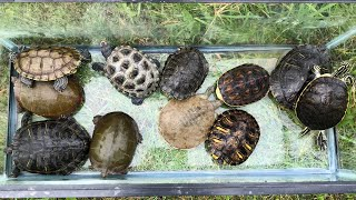 Releasing the Turtles in the Outdoor Pond