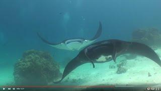 Raja Ampat Highlights on board the Seven Seas 2016