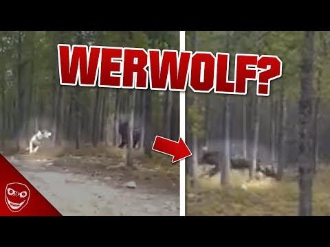 Xxx Mp4 Was Ist Das Video Zeigt Gruseliges Wesen Aus Den USA Werwolf 3gp Sex